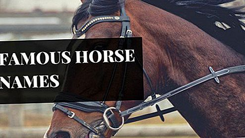 250-awesome-horse-racehorse-names-4.jpg